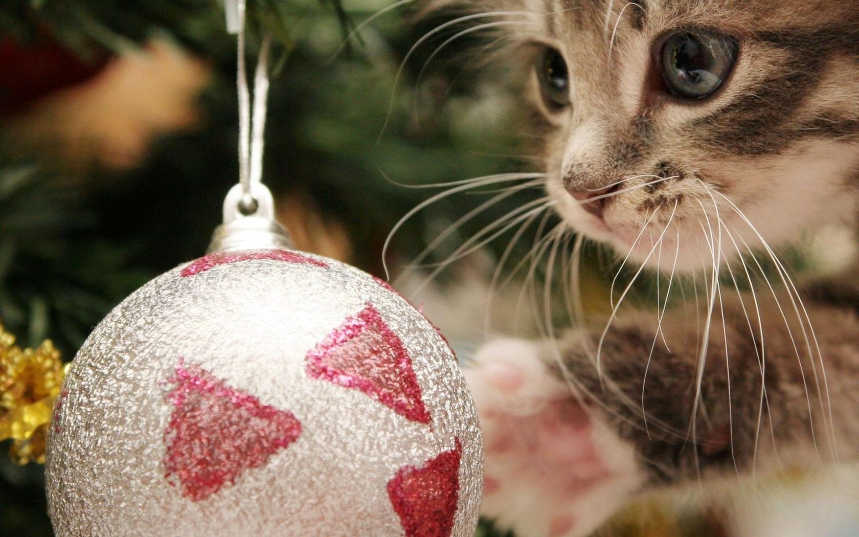 Картинки котят на новый год